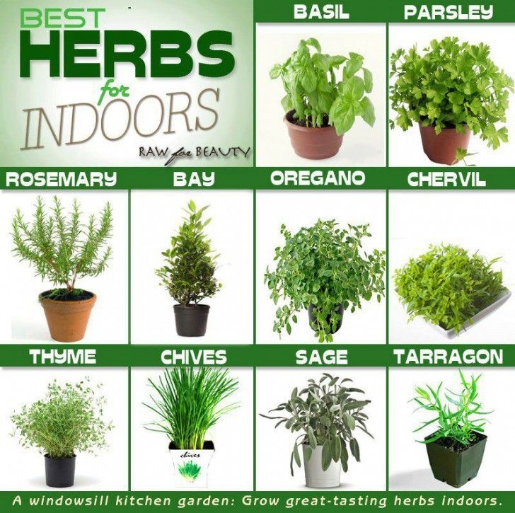 Garden tech support plant detectives and indoor herb gardens herbs that are easy to grow in pots indoors include anise basil bergamot borage caraway chamomile chervil chives coriander dill lemon balm workwithnaturefo