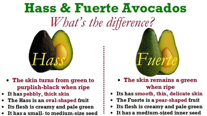 Image result for hass and fuerte avocados