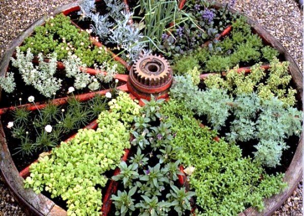 Plant A Fall Winter Herb Garden Late Gardening Austin